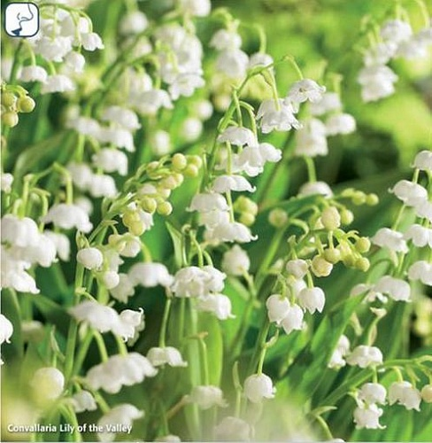 "Ландыш коллекция ""Lily of the Valley"" (1х10шт.)15"